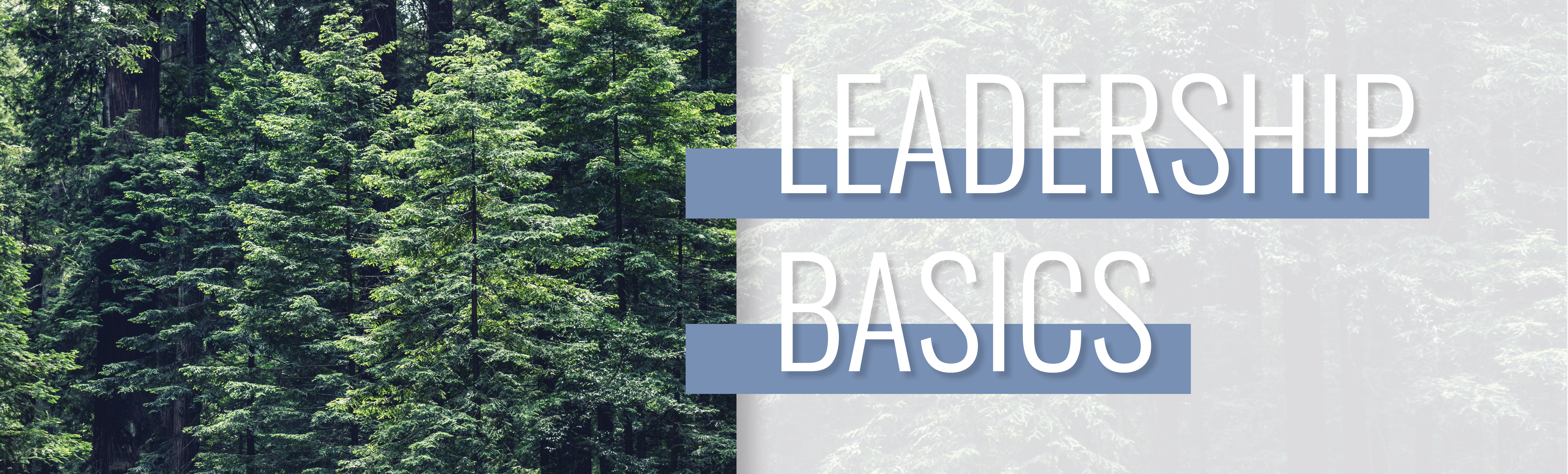 BCF_LeadBasics_Web